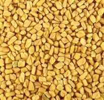 Пажитник сенной полезные свойства и противопоказания