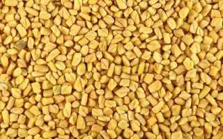 Пажитник сенной полезные свойства для женщин