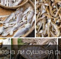 Сухая рыба чем полезна