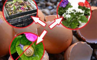 Яичная скорлупа полезна для каких растений