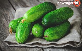 Полезные свойства огурцов свежих