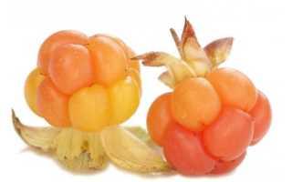 Морошка ягода полезные свойства для мужчин