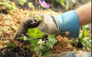Опилки для огорода польза