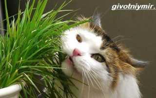 Трава для кошек чем полезна