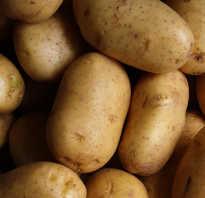 Чем полезна картошка отварная