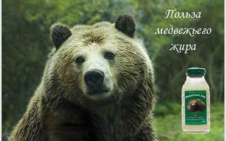 Чем полезен медвежий жир для женщин