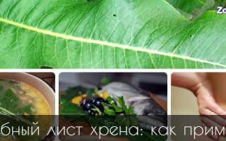 Листья хрена полезные свойства