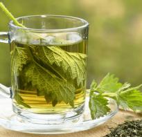 Крапива чай полезные свойства