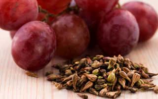 Полезны ли виноградные косточки для организма человека