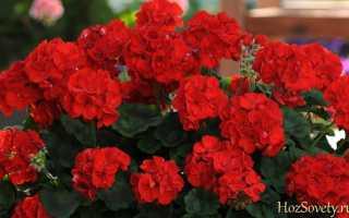 Самые полезные цветы домашние