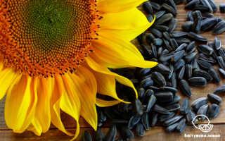 Полезные свойства подсолнечных семечек