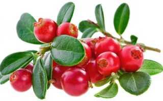 Ягоды брусника полезные свойства