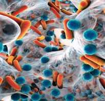 Полезные для человека микроорганизмы