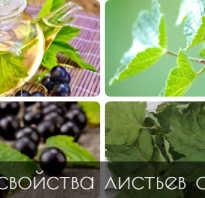 Листья смородины польза и вред