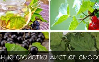 Полезные свойства смородина листья