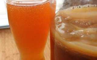 Питьевой гриб полезные свойства